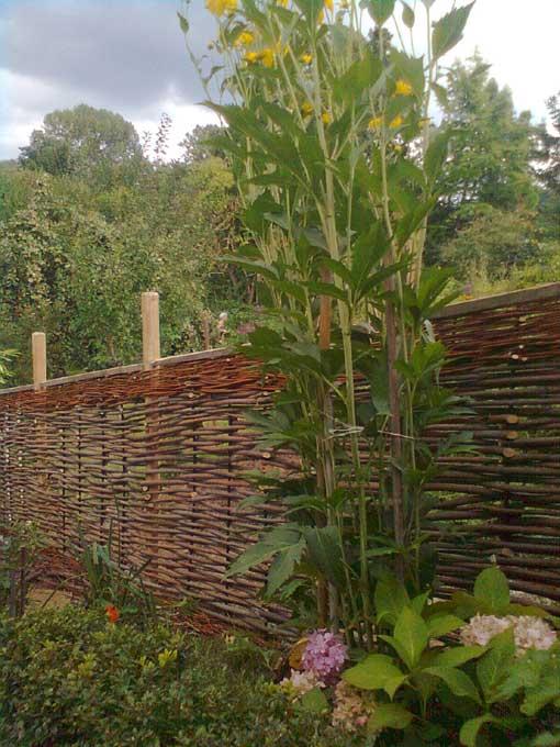 Weidenzaun mit Robinienpfählen von mikai Lebensraumgestaltung